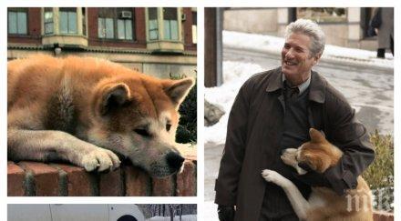 """ТРОГАТЕЛНО! Българският Хачико живее в """"Западен парк""""! Кучето Сара чака от месеци своя стопанин (СНИМКА)"""