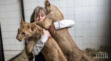 Лъвчетата Орхан и Мурад или как джендаризмът избива на содомия. Да помислим и за лъва от герба, а?