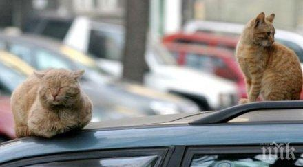 Бездомните котки в Пловдив 10 пъти повече от кучетата