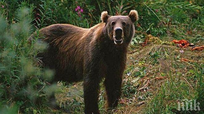 Екшън! Американец пребори мечка, за да спаси кученцето си