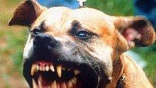 Куче нахапа 4-годишно дете в Дупница