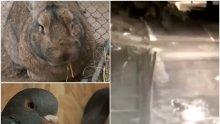 Заловиха апаша, отмъкнал заек и 10 гълъба от зоокъта в Перник