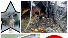 НЕВИЖДАНА ЖЕСТОКОСТ ВЪВ ВАРНА! Садист подпали бездомни кучета - две изгоряха в адски мъки (СНИМКИ 18+)
