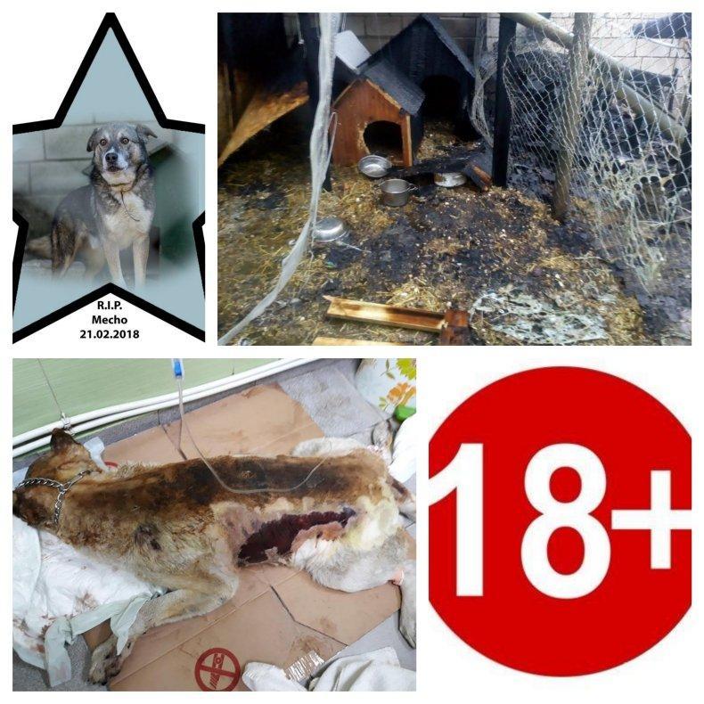 НЕВИЖДАНА ЖЕСТОКОСТ ВЪВ ВАРНА! Садист подпали бездомни кучета - две изгоряха в адски мъки (ОБНОВЕНА/СНИМКИ 18+)