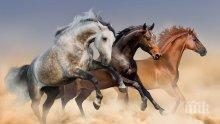 ШОК! Дивите коне изчезнаха от Земята