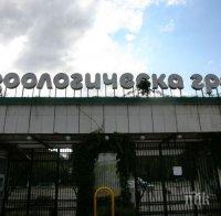 Затвориха зоологическата градина в София заради птичи грип