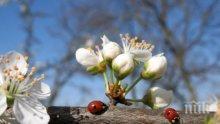 БАБА МАРТА СМЕНЯ КУРСА! Пролетта идва през уикенда с 21°