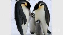 Императорски пингвини си направиха селфи в Антарктида