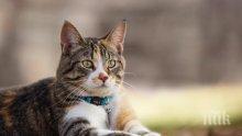 Котка спаси стопаните си от пожар