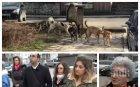Благоевградско село под терор на глутница кучета