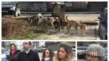 Берковица настръхна след жестоката смърт на баба Йорданка! Бездомни кучета властват по улиците (СНИМКИ)