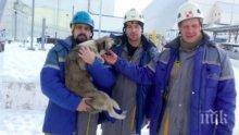 ЩЕ ВИ ТРОГНЕ ДО СЪЛЗИ! Работници влязоха в чернобилския саркофаг, за да спасят куче! (ВИДЕО)