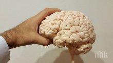 Учени смятат, че мозъкът на възрастните хора е неспособен да се развива
