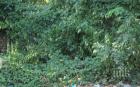 НАСРЕД СНЕГА: Стартира пролетното почистване на София