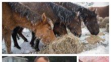 Прокуратурата започна проверка за изоставените коне в Осогово