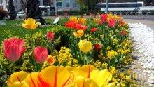 Пловдив става райска градина с 3 милиона цветя