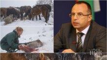ИЗВЪНРЕДНИ МЕРКИ! Порожанов взе главата на шефа на БАБХ в Кюстендил за конете в Осогово