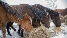 МЕРКИ! Проверяват 265 ферми заради случая с изоставените коне