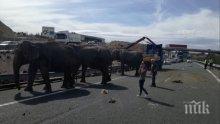 Камион със слонове катастрофира на магистрала в Испания (ВИДЕО)