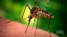 ТИ ДА ВИДИШ! Разработват радар, способен да засече комар от 1,5 километра