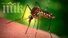 Опасност от атака на тигров комар в Пловдив