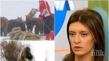 ОТ ПЪРВО ЛИЦЕ: Разказ за ужаса с изоставените коне в Осоговската планина