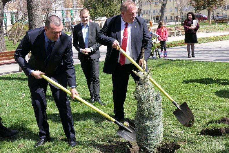 Горски директори от цяла Европа ще садят дръвчета в Рила