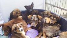 УЖАС В ПЕРНИК! Откриха много мъртви кучета в двор, арестуваха собственика