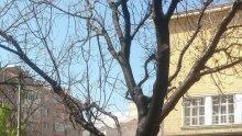 ИНЦИДЕНТ! Пожар вилня до училище в центъра на София (ВИДЕО/СНИМКИ)