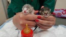 Изхвърлиха новородени котенца пред пловдивска клиника! (СНИМКИ)