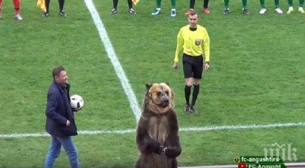 футболен мач русия открит мечка видео