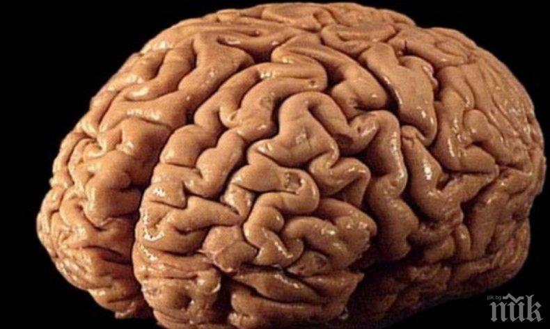 Тежки моменти в живота могат да оставят своя отпечатък върху мозъка на човека