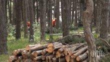 Масова сеч на гора изправи на нокти Сопот
