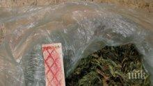 """СПЕЦАКЦИЯ В СОФИЯ! Иззеха 5 кила марихуана и кокаин в """"Манастирски ливади"""" - двама са арестувани"""