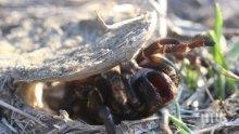 Почина най-старият паяк в света