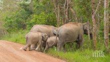 УЖАСЯВАЩО! Слонове прегазиха един от най-големите бежански лагери в света, най-малко 12 загинаха