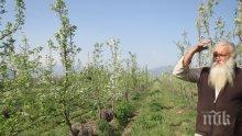 Монаси отглеждат биопродукти, с парите от тях вдигат църква