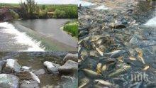 ШОКИРАЩ СИГНАЛ ДО ПИК! Полицаи в чудовищна афера – избиват незаконно рибата с ток в размножителния период, реките опустяха (ВИДЕО)