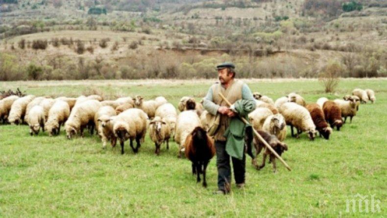 Заплатата на овчар до 1500 лв., ще внасяме от Виетнам