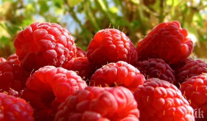 Руските и сръбските малини подбиват цената на нашите