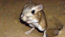 Прекалено много секс заплашва популацията на мишки