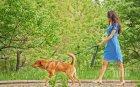 Жена с куче пометена в Пловдив! Пресичала неправилно (СНИМКИ)