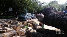 НЕЛЕП ИНЦИДЕНТ! Дърво премаза две коли в Пловдив