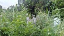 Гробищата като джунгла преди Черешова задушница