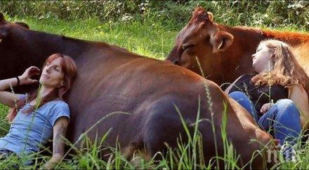 МОДЕН ТРЕНД! Усетиш ли, че изкукваш - бръкни се 300 долара и гушни крава!