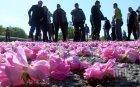Мая Манолова иска 16 млн. лв. от държавата за розопроизводителите