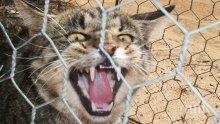 Напаст! В Австралия построиха ограда с дължина от 44 км за защита от диви котки