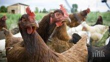 Над 57 000 птици са унищожени в огнище на инфлуенца в село Стефаново