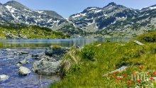 """Инициативи в Национален парк """"Пирин"""" по повод Световния ден на околната среда"""