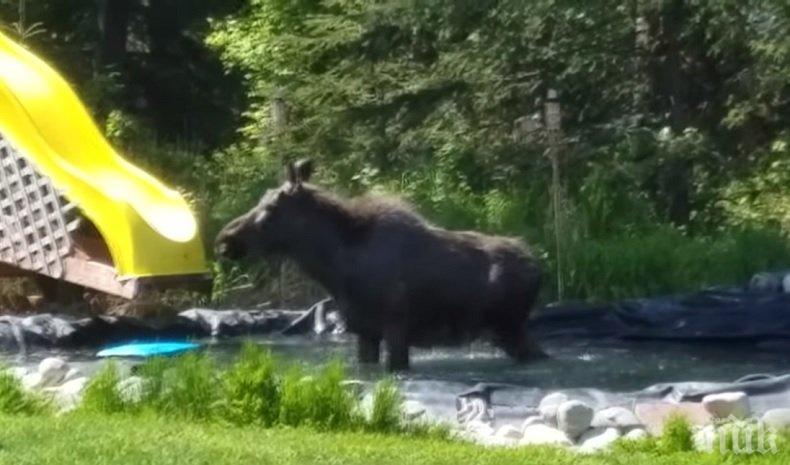 КУПОНДЖИЯ! Лос се забавлява в семеен басейн (ВИДЕО)